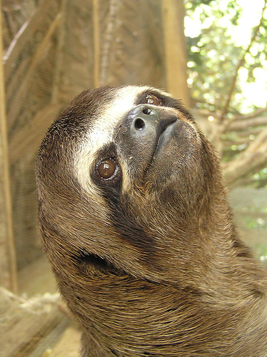 sloth photo by pierre pouliquin at flickr -cc