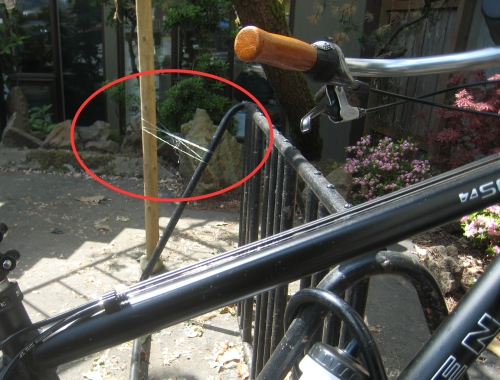 Waxed Floss Rack Security