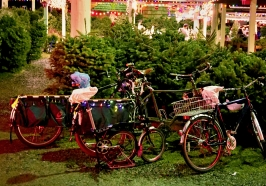 bikes at Christmas tree lot